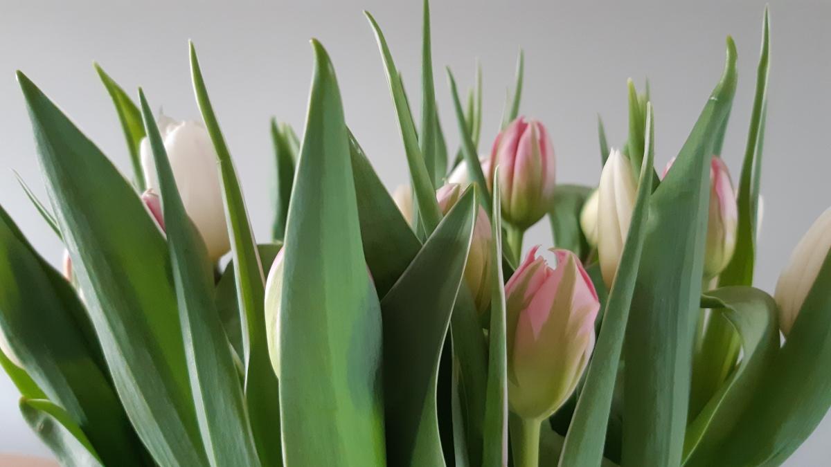5 makkelijke tips voor een voorjaars-huis